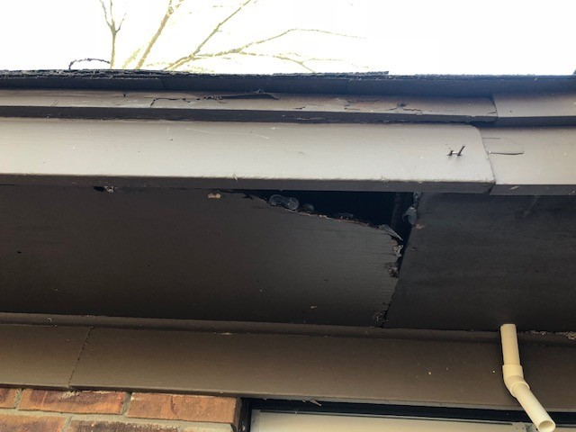 Picture of rotted soffit.