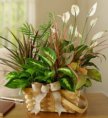 1-800-Flowers Classic Dish Garden