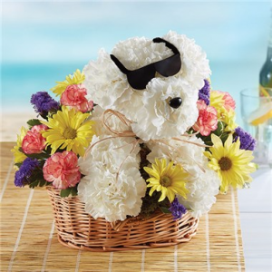 1-800-FLOWERS® COOL PUP™  in Valley City, OH | HILL HAVEN FLORIST & GREENHOUSE