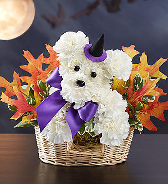 1-800-Flowers® Witchy-Pooch™