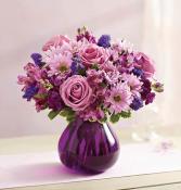 1 800 Lavender Dreams