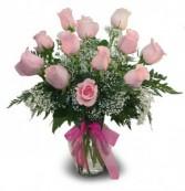 1 Dozen Classic Pink Roses