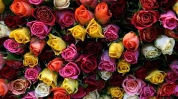 1 Dozen Roses mixed Dizayn choose