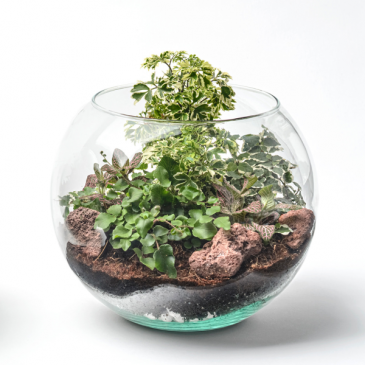 Bubble Terrarium
