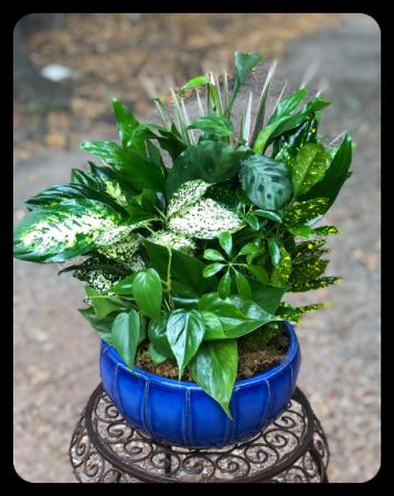 "10"" Ceramic Dish Garden"