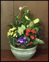 "10"" Ceramic Eurogarden Plants"