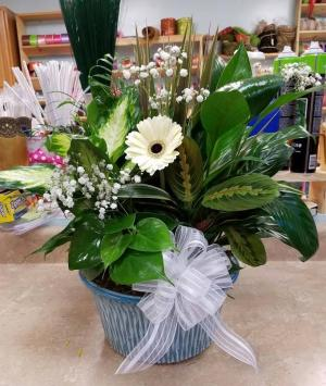 "10"" Dish garden Plant in Bryson City, NC 