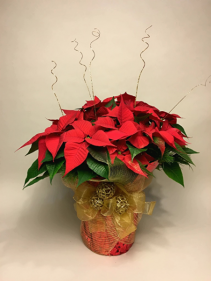 10'' Dressed Poinsettia Plant Christmas Planter
