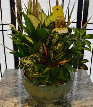 """10"""" Rock Dish Garden Green Plants in Levelland, TX 