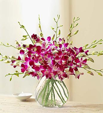 10 Stem Orchid - Clear Vase Arrangement