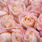 100 kisses roses