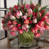 100 Tulips