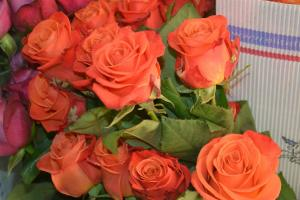 12 Assorted Roses  in Washburn, ND | Frontier Floral & Gifts