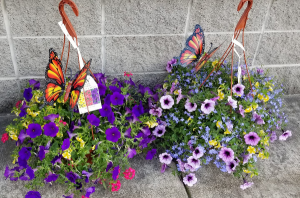"12"" Butterfly Hanging Basket Hanging outdoor Plant in Fulton, NY 