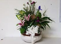 "12"" Dish garden Plant"