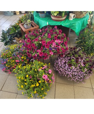 "12"" Hanging Basket Outdoor Plants"