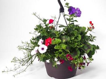"""12 """" Hanging Basket.   Planted outdoor Hanging Basket"""