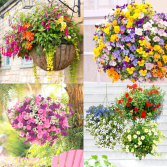 Outdoor 12 inch Patio Hanging Basket Available May 3, 2021 for delivery