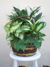 "12"" Mixed Foliage Planter Basket"