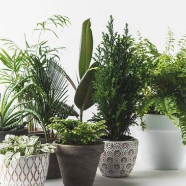 12 Month Plant Plan Flower Subscription