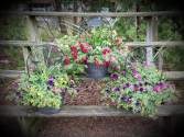 """12"""" Welcome Planter Plant"""