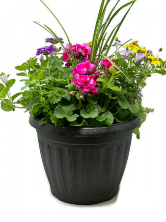 "13"" Mixed Patio Pot Planter"