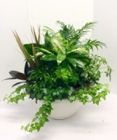 Ceramic Dish Garden Green Plants