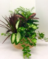 "14"" Extra Large Basket Dish Garden Green Plants"