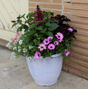 14 inch Custom Combination Planter Outdoor Annual Combination