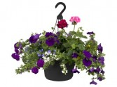 "14"" Mixed Outdoor Hanging Basket Mothers Day"