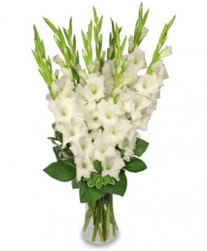 Tranquil Light  White Gladiolus Vase in Allen, TX | Lovejoy Flower and Gift Shop