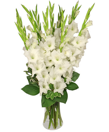 Tranquil light white gladiolus vase in ambler pa flowers by tranquil light white gladiolus vase mightylinksfo