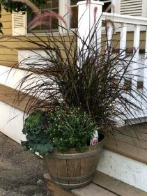 "15"" Whiskey Barrel w/ fall flowers Fall Greenhouse"