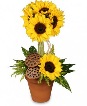 Pot O' Sunflowers Topiary Arrangement in Galveston, TX | J. MAISEL'S MAINLAND FLORAL