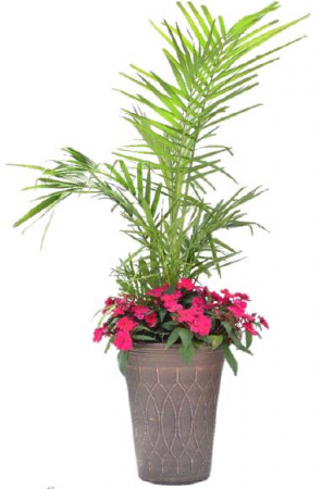 16in. Palm Planter Plant