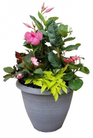 16in. Premium Combination Planter Plant