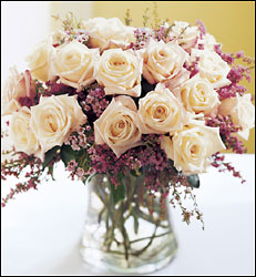 18 Cream Colored Roses by Enchanted Florist of Cape Coral