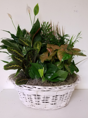"18"" Dish Garden Plant in Bryson City, NC 