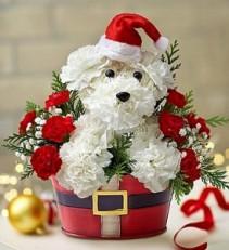 1800Flowers Santa Paws Holiday Arrangement
