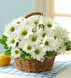 White Daisy Basket  Also available in  MIXED colors!!! in Elyria, OH | PUFFER'S FLORAL SHOPPE, INC.