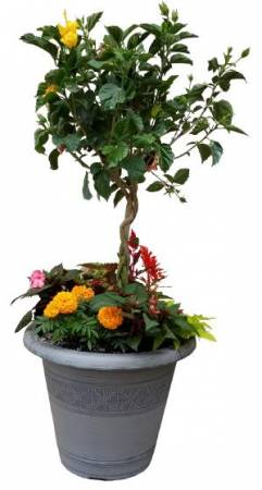 18in. Combination Planter Plant  in Kettering, OH | FLOWERAMA