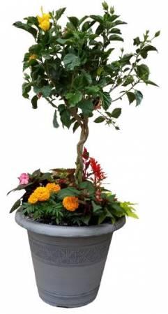 18in. Combination Planter Plant