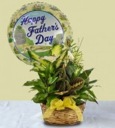 Dish Garden Plant with Mylar Balloon Father's Day