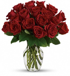 2 Dozen long stem red roses