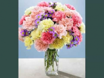 2 Dozen Mixed Carnations