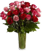 2 dozen Pink and Red  Rose Vase