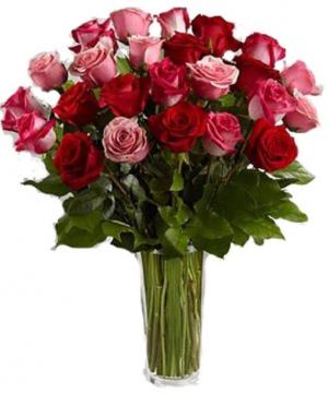 2 dozen mixed roses Roses in Canton, GA | Canton Florist