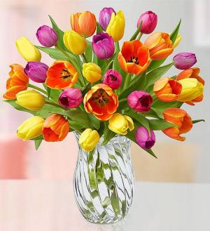 2 Dozen Tulip  Floral Arrangement in Lexington, NC | RAE'S NORTH POINT FLORIST INC.