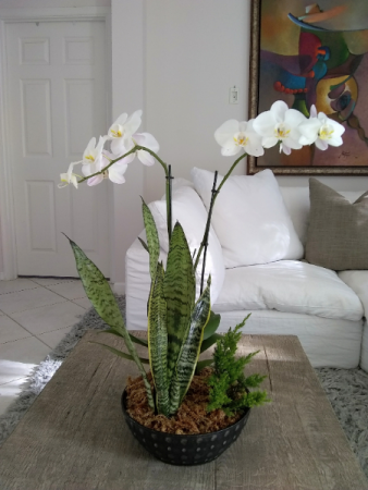 2 Orchids Arrangement