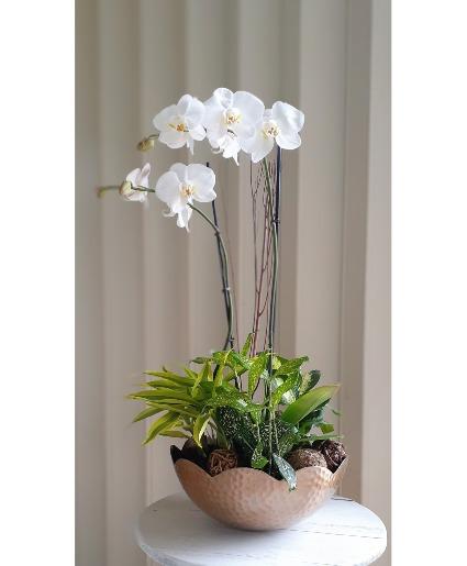 2 Orchids Arrangement